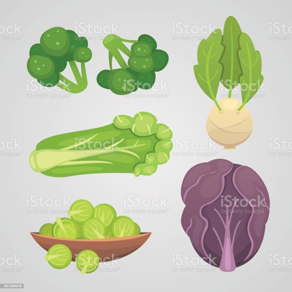 Set vector Cabbage and Lettuce. Vegetable green broccoli, kohlrabi, other different cabbages. vector art illustration