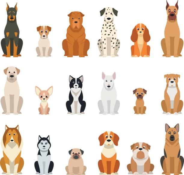 bildbanksillustrationer, clip art samt tecknat material och ikoner med ställa in vektor hundar - sitta
