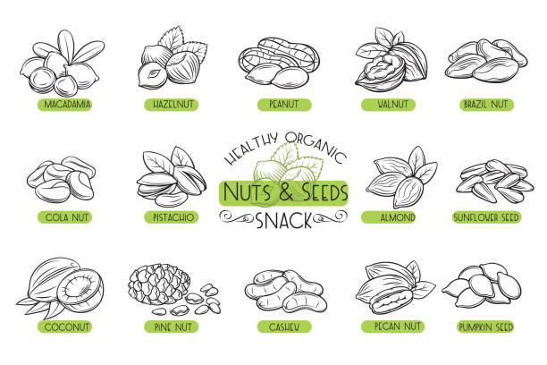 Set vector icons nuts and seeds. vector art illustration