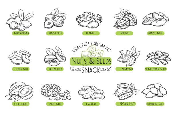 벡터 아이콘 견과류와 씨앗을 설정 합니다. - nuts stock illustrations