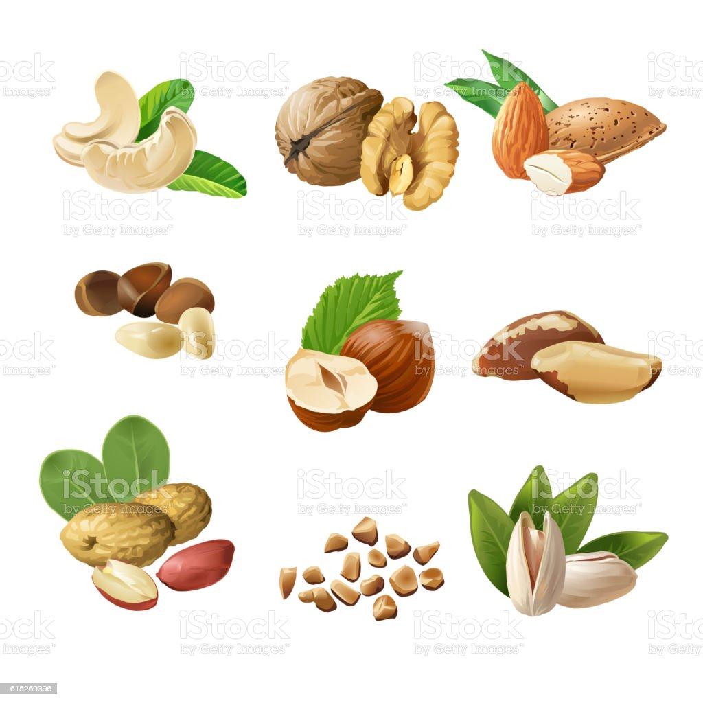 Set vector icons of nuts set vector icons of nuts - immagini vettoriali stock e altre immagini di alimentazione sana royalty-free