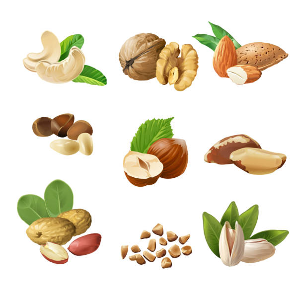 Set vector icons of nuts Set of vector icons of nuts - cashews, walnuts, almonds, pine nuts, hazelnuts, brazil nuts peanuts pistachio walnut stock illustrations
