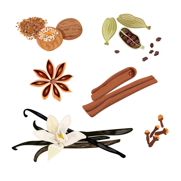 Set vector icons spices. Cardamom, star anise, nutmeg, vanilla flower and sticks, cloves, cinnamon. Vector Illustration. Set vector icons spices. Cardamom, star anise, nutmeg, vanilla flower and sticks, cloves, cinnamon. Vector Illustration. healthy lifestyle, healthcare cosmetics ointments perfumery baking star anise stock illustrations