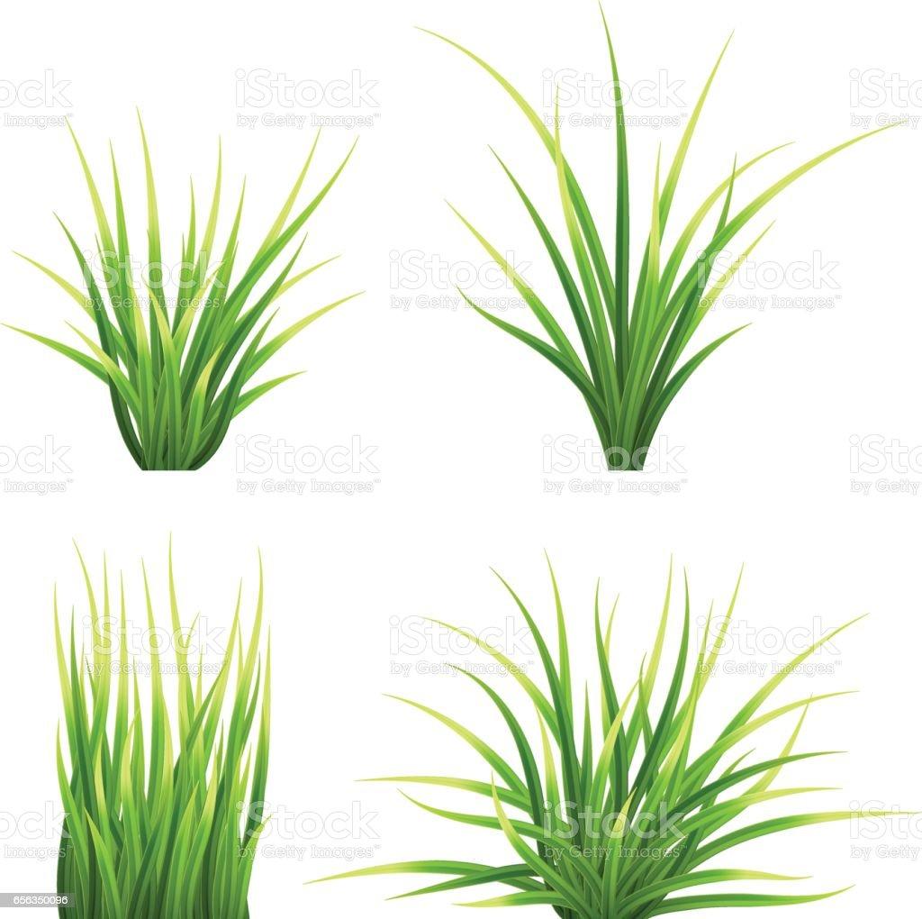 set vector realictic grass set vector realictic grass vecteurs libres de droits et plus d'images vectorielles de botanique libre de droits
