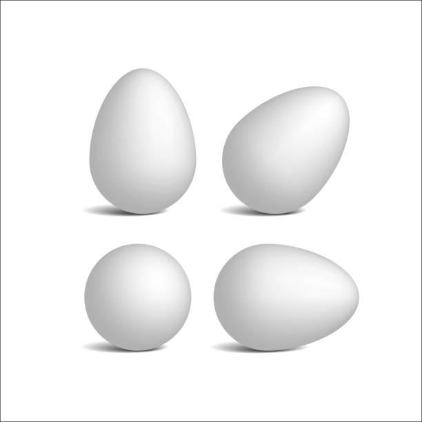 Setzen Sie realistische weißen Eiern Vektor. – Vektorgrafik