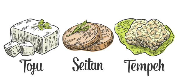 Set Vegan and Vegetarian food. Tofu, Seitan, Tempeh . Vector color vintage engraved illustration isolated on white background Set Vegan and Vegetarian food. Tofu, Seitan, Tempeh . Vector black vintage engraved illustration isolated on white background temps stock illustrations