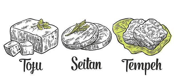 Set Vegan and Vegetarian food. Tofu, Seitan, Tempeh . Set Vegan and Vegetarian food. Tofu, Seitan, Tempeh . Vector black vintage engraved illustration isolated on white background  temps stock illustrations