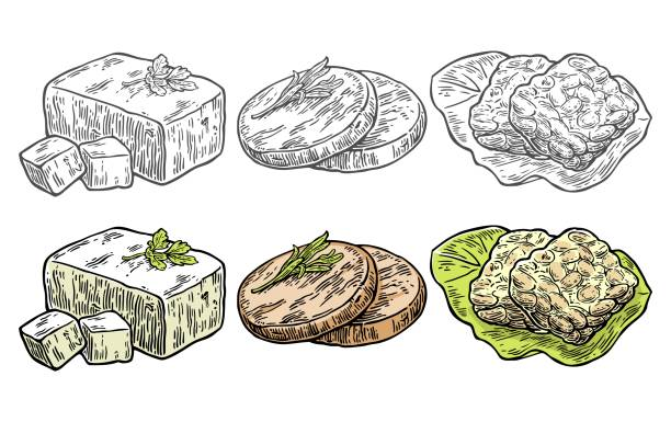 Set Vegan and Vegetarian food. Tofu, Seitan, Tempeh Set Vegan and Vegetarian food. Tofu, Seitan, Tempeh. Vector black and color vintage engraving illustration isolated on white background temps stock illustrations
