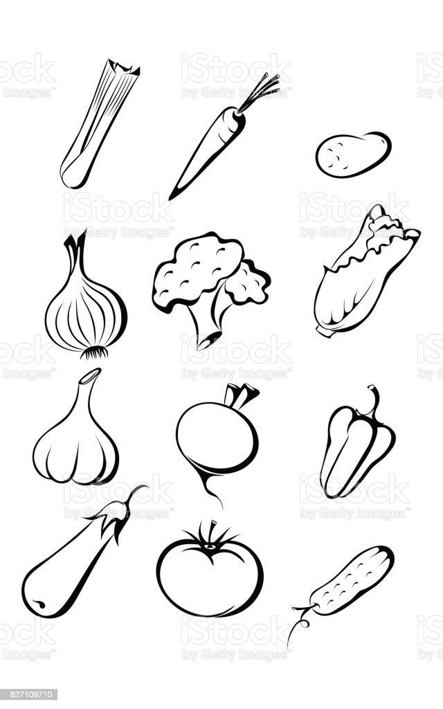 set vegetables in contour style vector art illustration
