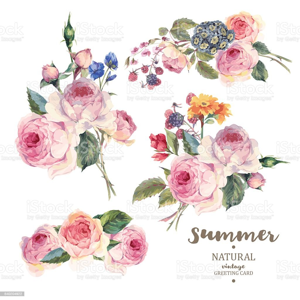 Set vintage floral vector bouquet of English roses vector art illustration