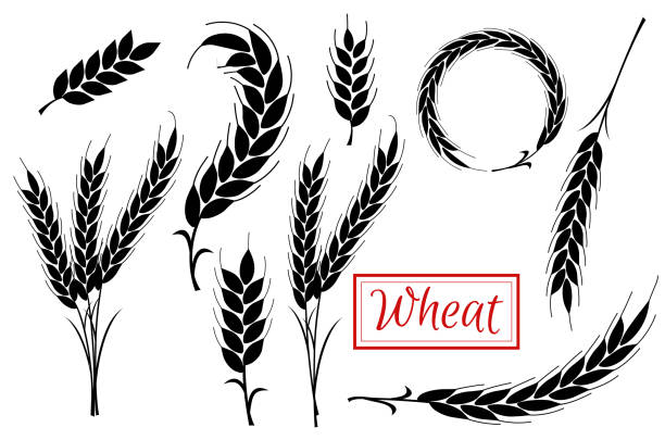 Set Wheat Ears Icons and Logo. Organic wheat, bread agriculture. Flat design. Set Wheat Ears black Icons and Logo. For Identity Style of Natural Product Company. Organic wheat, bread agriculture. Flat design. isolated on white background bread borders stock illustrations