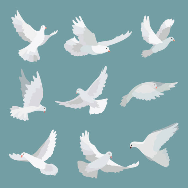 Set white doves peace isolated on background. Vector bird illustration. Set white doves peace isolated on background. Vector bird illustration diving into water stock illustrations