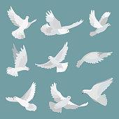 Set white doves peace isolated on background. Vector bird illustration.
