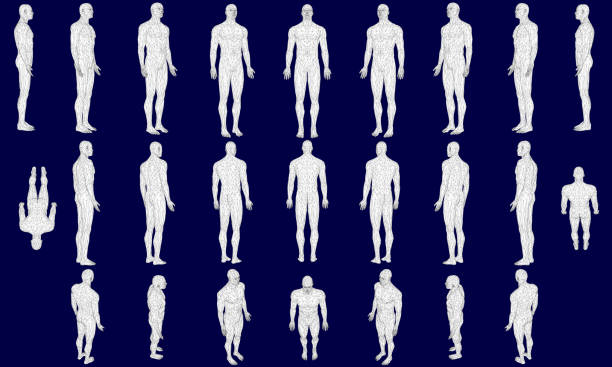 Set with a polygonal man in different positions. 3D. Vector illustration Set with a polygonal man in different positions. 3D. Vector illustration. the human body stock illustrations