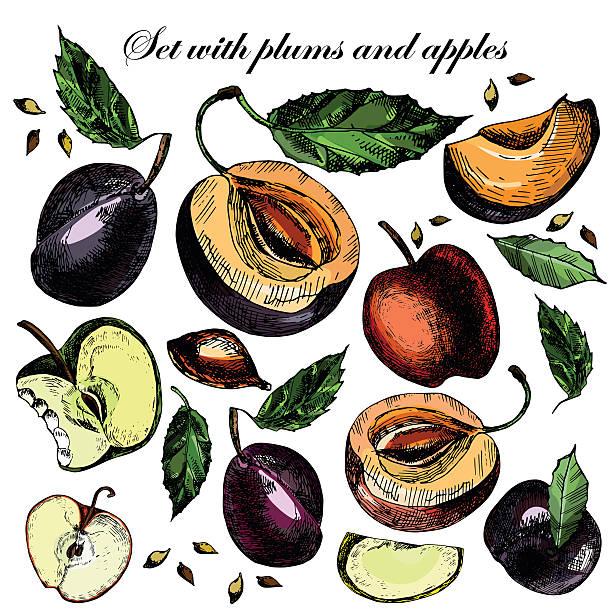 set mit schönen reife pflaumen, äpfel und blätter - nektarinenmarmelade stock-grafiken, -clipart, -cartoons und -symbole