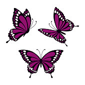 set with three purple butterflies isolated on white background, butterflies in direct, angular and lateral angles