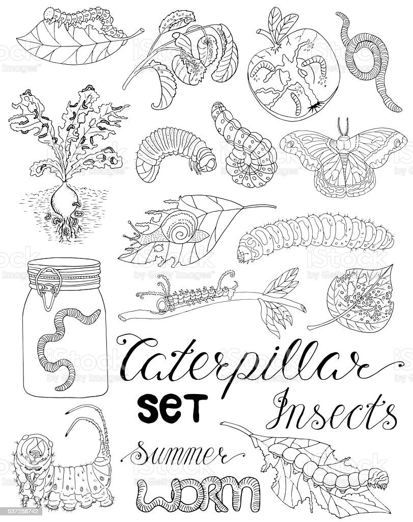 Set with caterpillars, larvas and worms vector art illustration