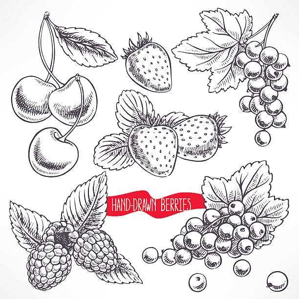 set with different berries vector art illustration