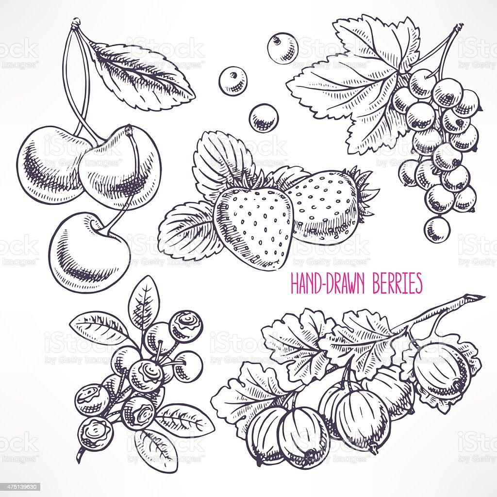 set with different sketch berries vector art illustration