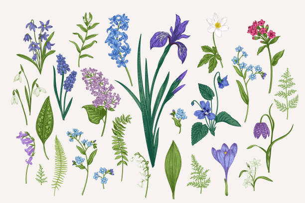stockillustraties, clipart, cartoons en iconen met set met bloemen en bladeren - iris plant