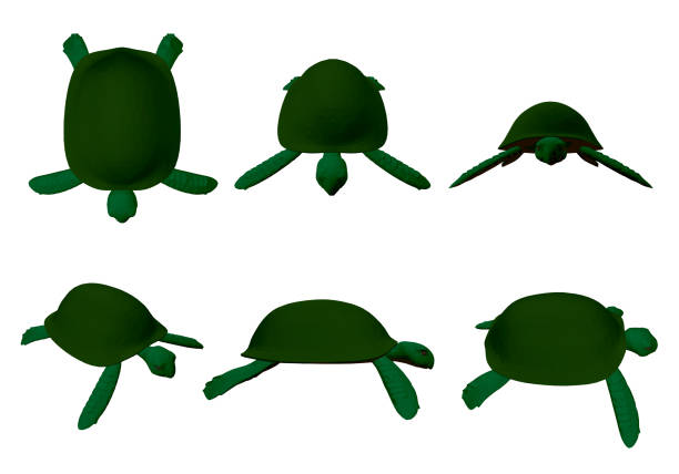 stockillustraties, clipart, cartoons en iconen met set met groene schildpadden - leatherback