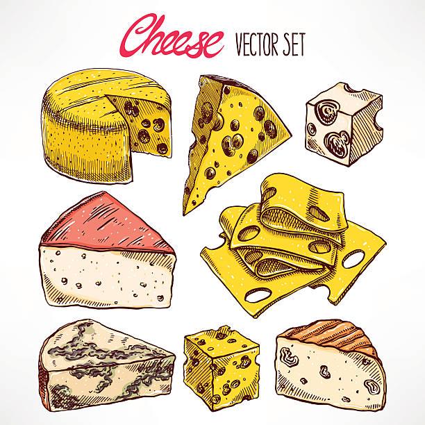 illustrazioni stock, clip art, cartoni animati e icone di tendenza di disegnati a mano set con formaggi - maasdam