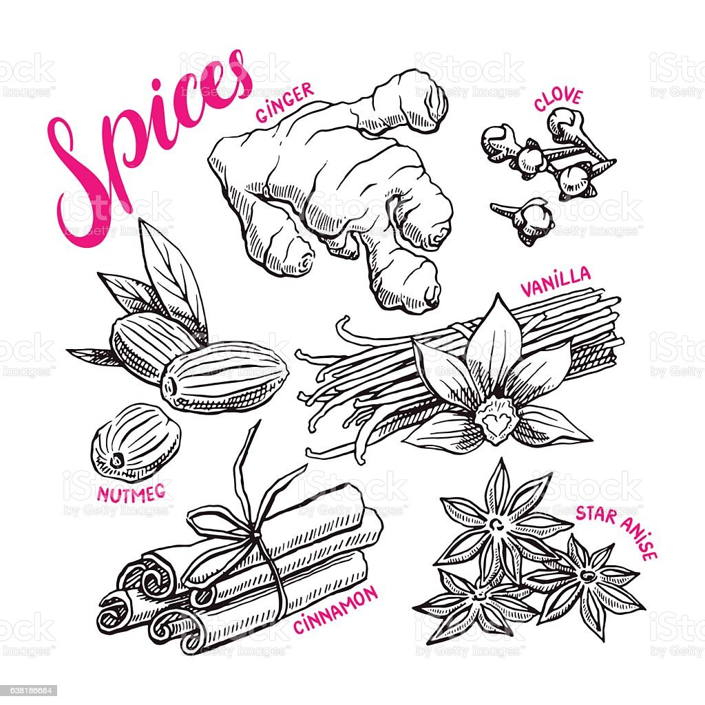 Set with hand-drawn spices vector art illustration