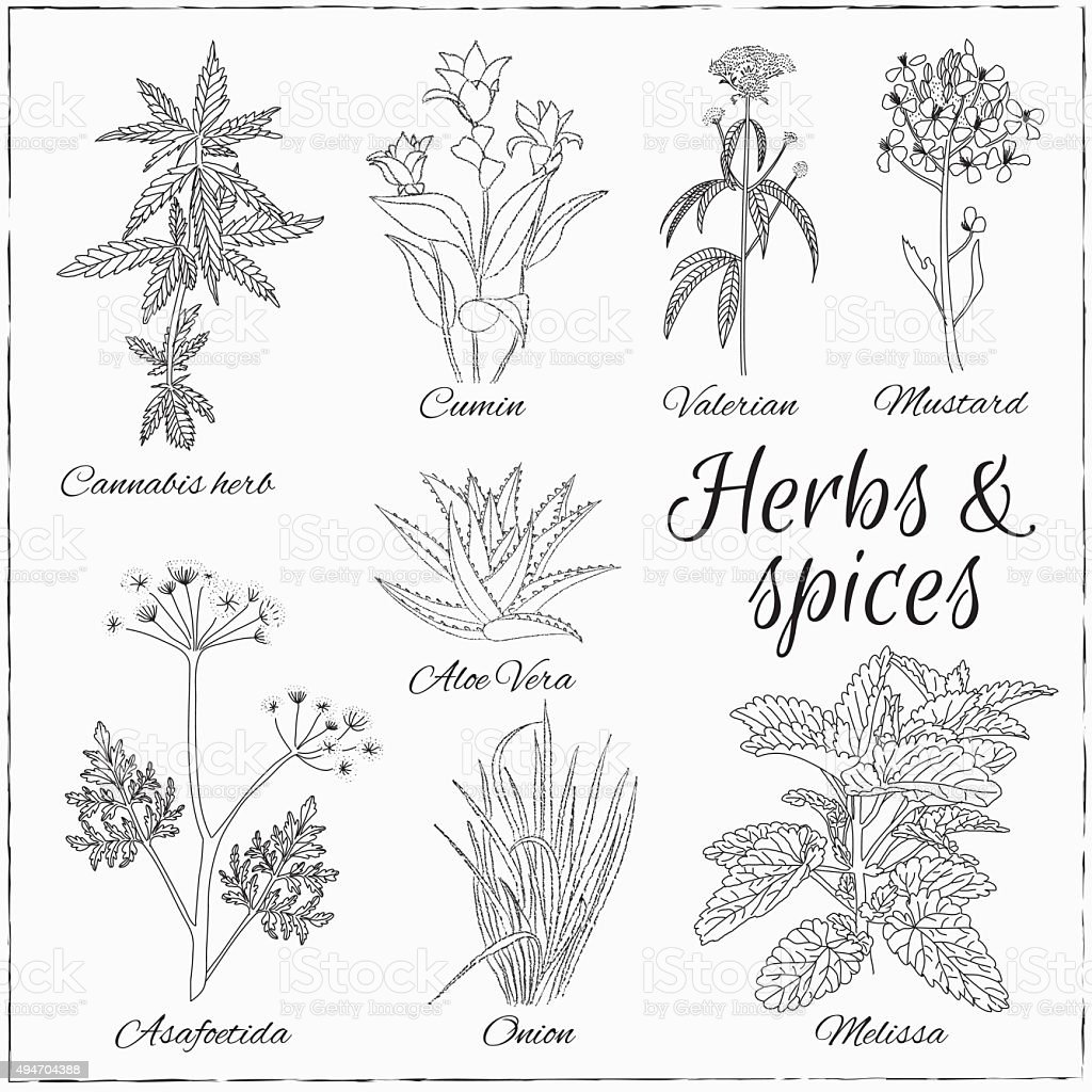 set with Herbs and Spices. vector art illustration