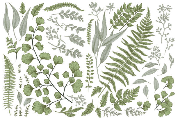 Set with leaves and ferns. vector art illustration