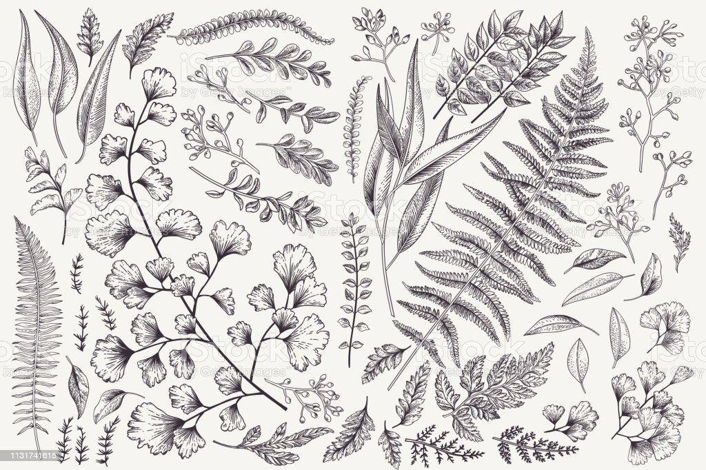 Set with leaves and ferns. Set with leaves. Botanical illustration. Fern, eucalyptus, boxwood. Vintage floral background. Vector design elements. Isolated. Black and white. Art stock vector