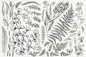 Set with leaves. Botanical illustration. Fern, eucalyptus, boxwood. Vintage floral background. Vector design elements. Isolated. Black and white.