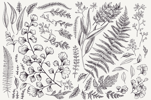 Set With Leaves And Ferns Stock Illustration - Download Image Now