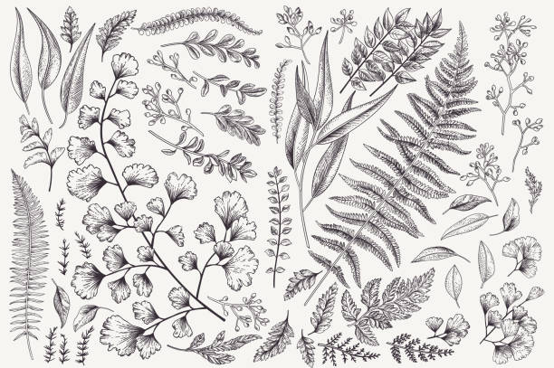 set with leaves and ferns. - лекарственная трава stock illustrations