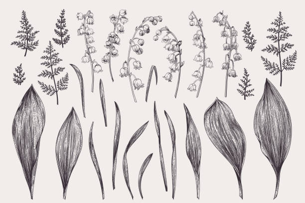 Set with lily of the valley. Set with flowers of a lily of the valley. Black and white. valley stock illustrations