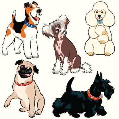set with small dog breeds