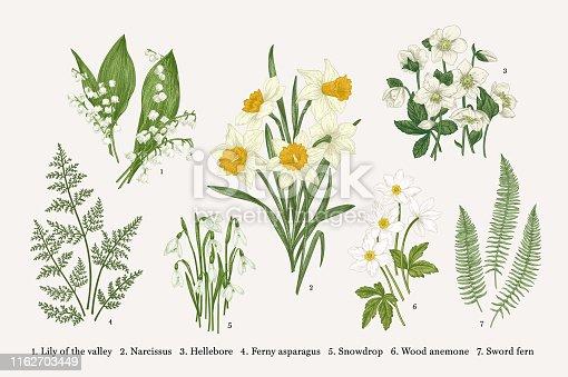Set with flowers. Spring plants. Vector botanical illustration. Isolated design elements on white background