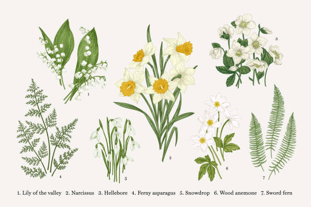 Set with spring flowers. Set with flowers. Spring plants. Vector botanical illustration. Isolated design elements on white background daffodil stock illustrations