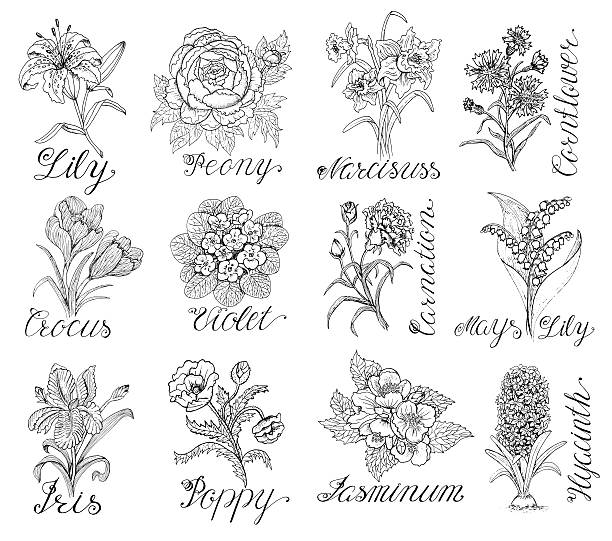 stockillustraties, clipart, cartoons en iconen met set with vintage flowers and calligraphy text - iris plant