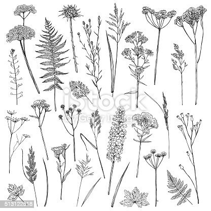 Set of illustrations of plants. Sketch. Freehand drawing.