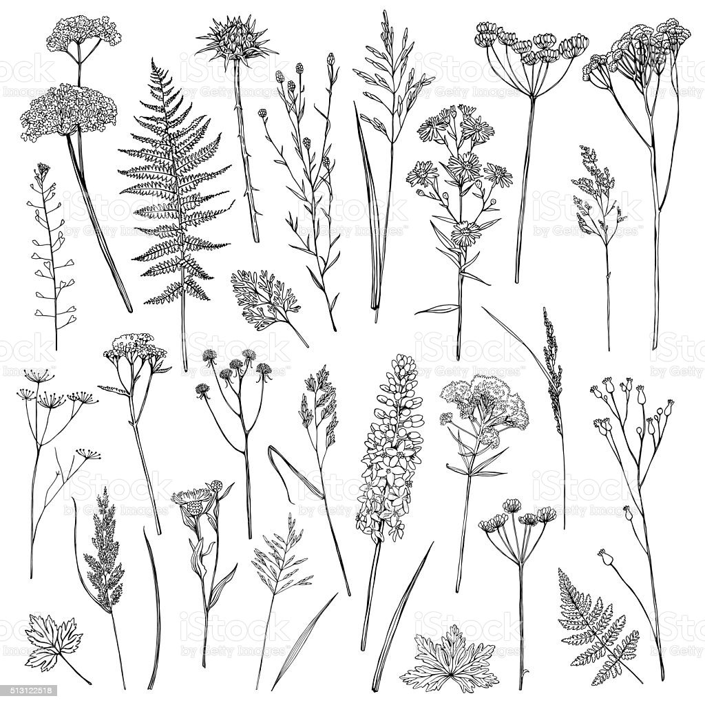 Set with wildflowers vector art illustration