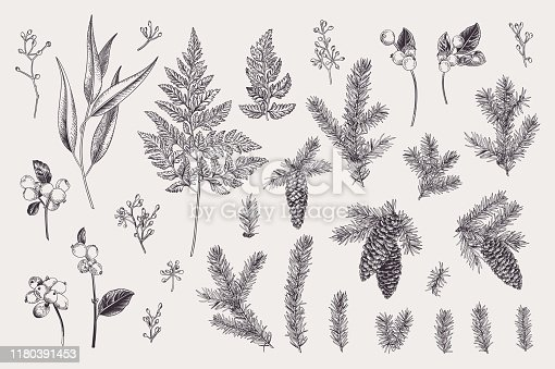 Set with Christmas plants. Vector design elements. Spruce, cones, snowflake, eucalyptus, fern. Engraving illustration. Black and white.