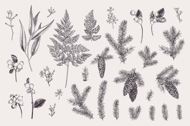 Set with winter plants. vector art illustration