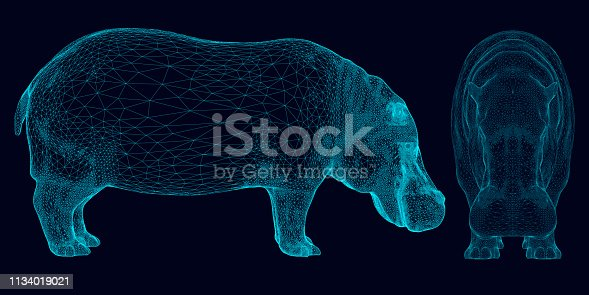 Set with wireframe hippopotamus of blue lines on a dark background. Side and front view. 3D. Vector illustration.