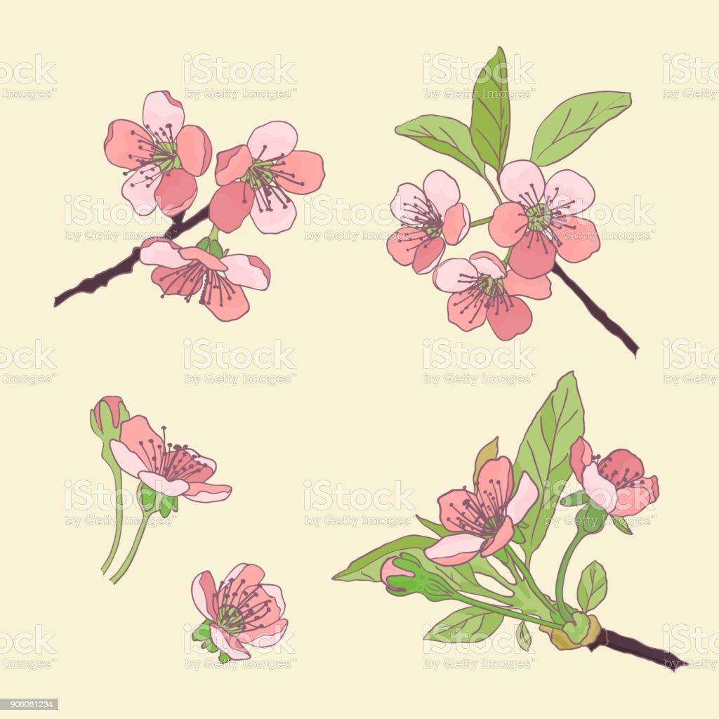 Ensemblecerisiers En Fleur Fleurs De Cerisier Fleurs De