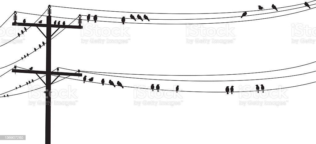 Several Bw Birds Perched On A Old Telephone Wire Stock Vector Art ...