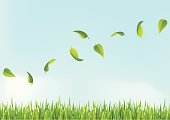 Vector illustration of a flying leafs on sky with grass.