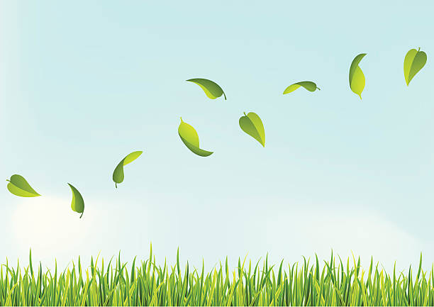 stockillustraties, clipart, cartoons en iconen met several leaves flying above the grass - grasspriet