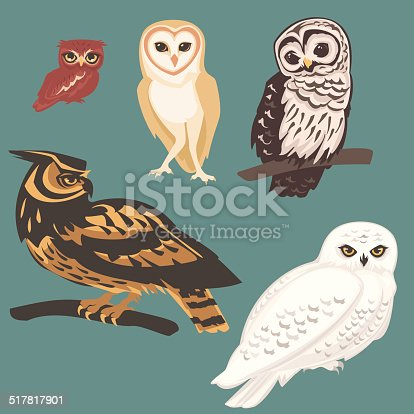 Realistically rendered vector illustrations of five Owl bird species. A clay brown Screech Owl. A gold and white heart faced Barn Owl. A calm brown and white Barred Owl with big brown eyes. A gold, tan, a brown Eurasian Eagle Owl with gold eyes, and an intense gold eyed white Snowy Owl.