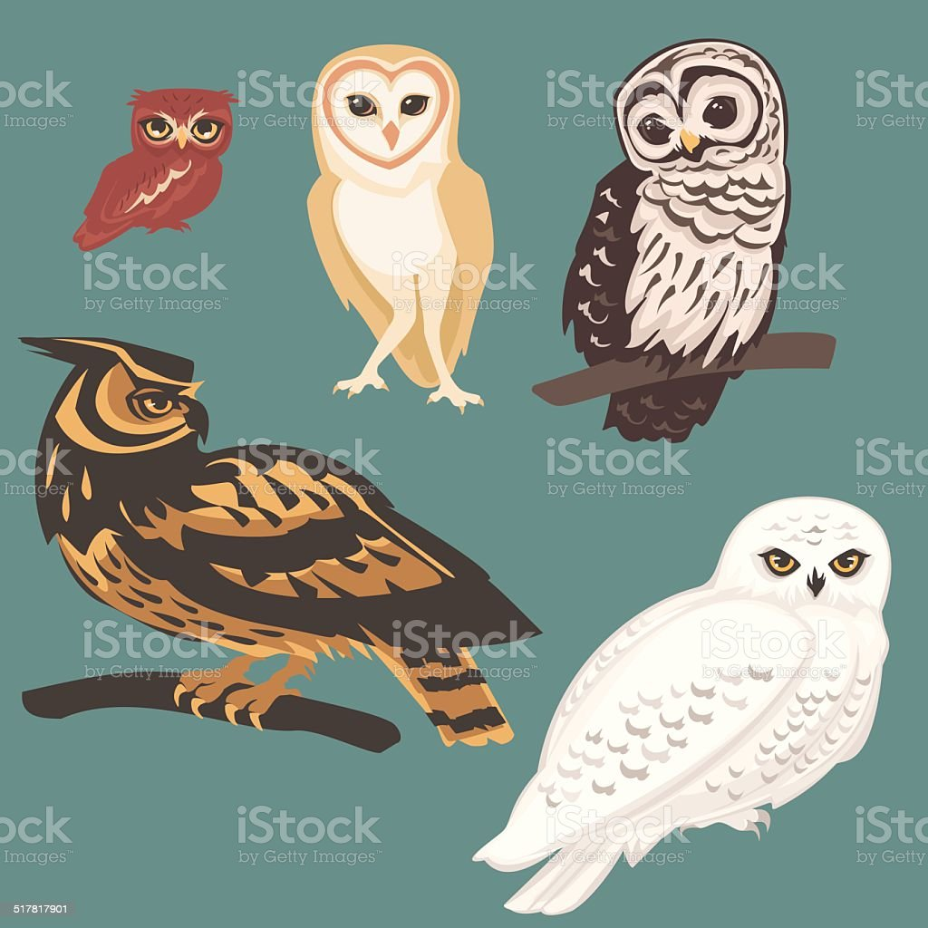 Several species of Owls向量藝術插圖
