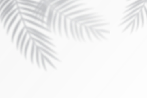 Shadow effects with tropical palm leaves in the corner.